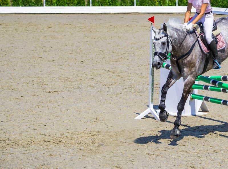 Het mooie meisje op grijs paard in het springen toont, ruitersporten stock afbeelding