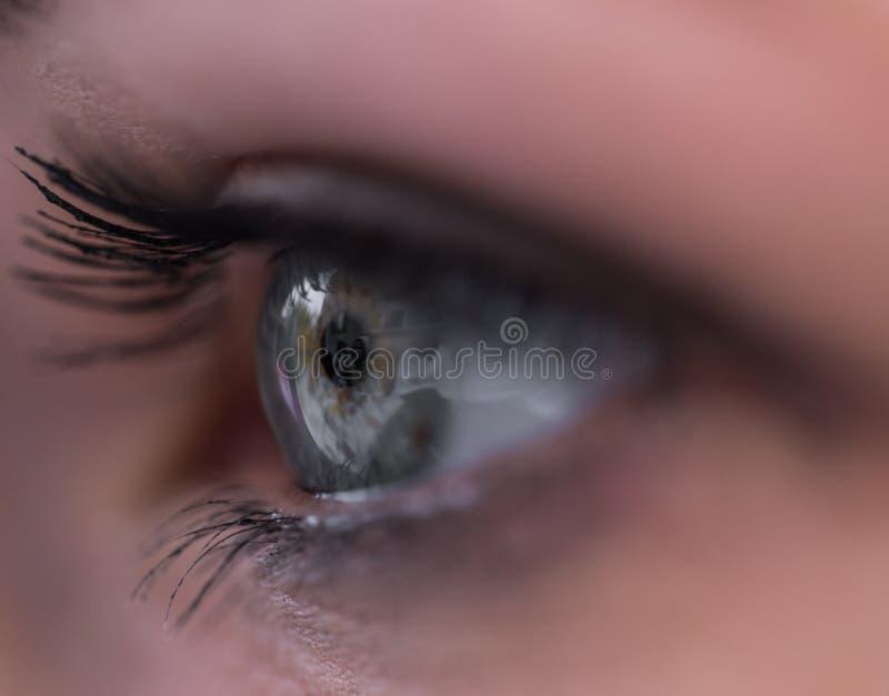 Het mooie oog van de vrouw met uiterst lange wimpers royalty-vrije stock fotografie