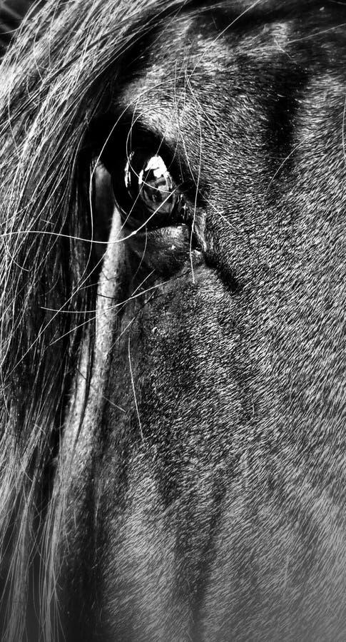 Het mooie Oog van het Paard stock afbeelding