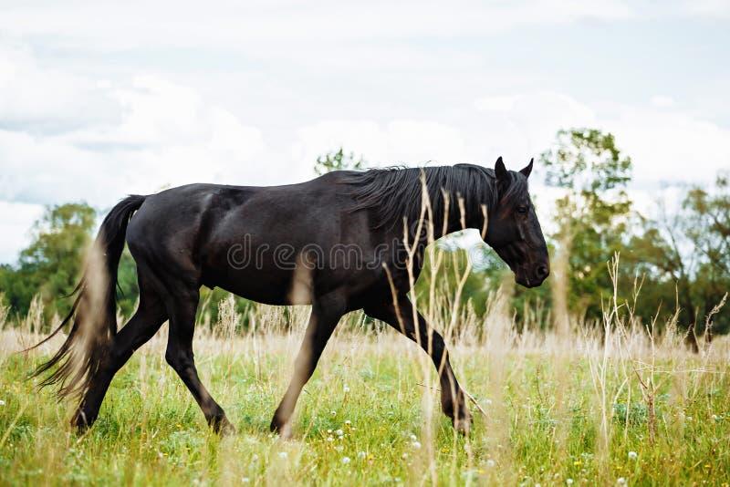 Het mooie paard eet gras op het gebied royalty-vrije stock foto
