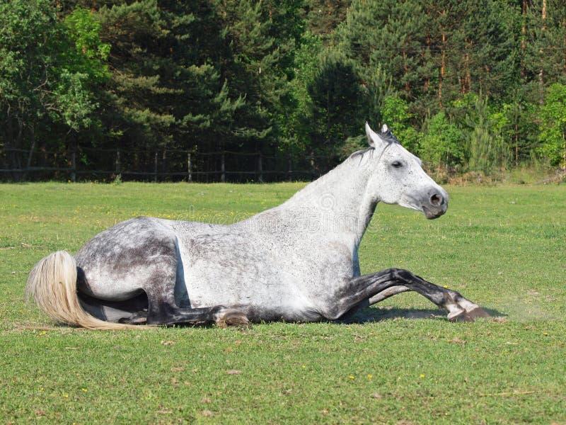 Het mooie paard heeft een rust stock foto's