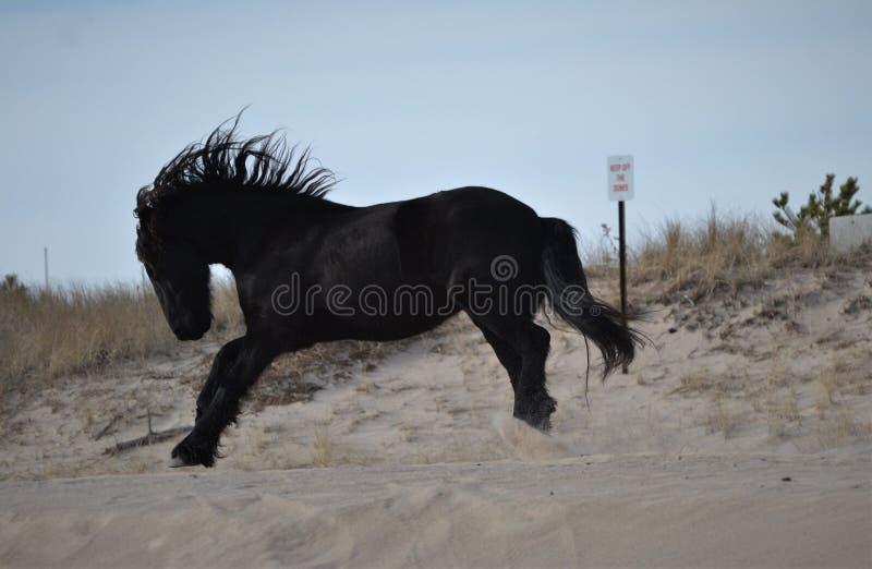 Het mooie paard lopen vrij op het strand tijdens een warme de winterdag royalty-vrije stock fotografie