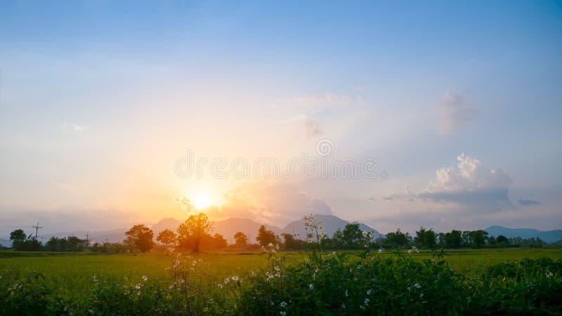 Het mooie padieveld van zonsondergang gouden Yong in schemeringhemel stock foto