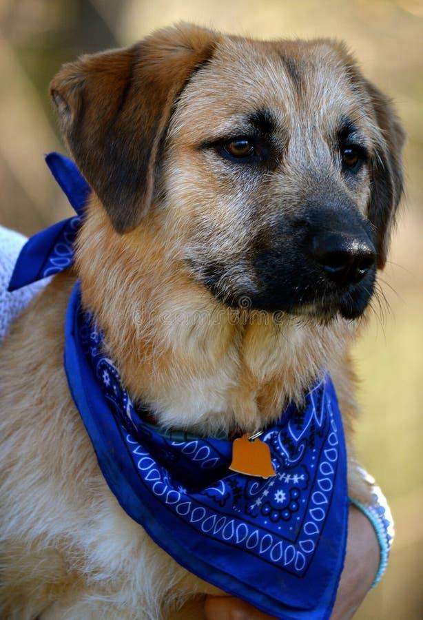 Het mooie puppy bekijkt de wereld stock foto's