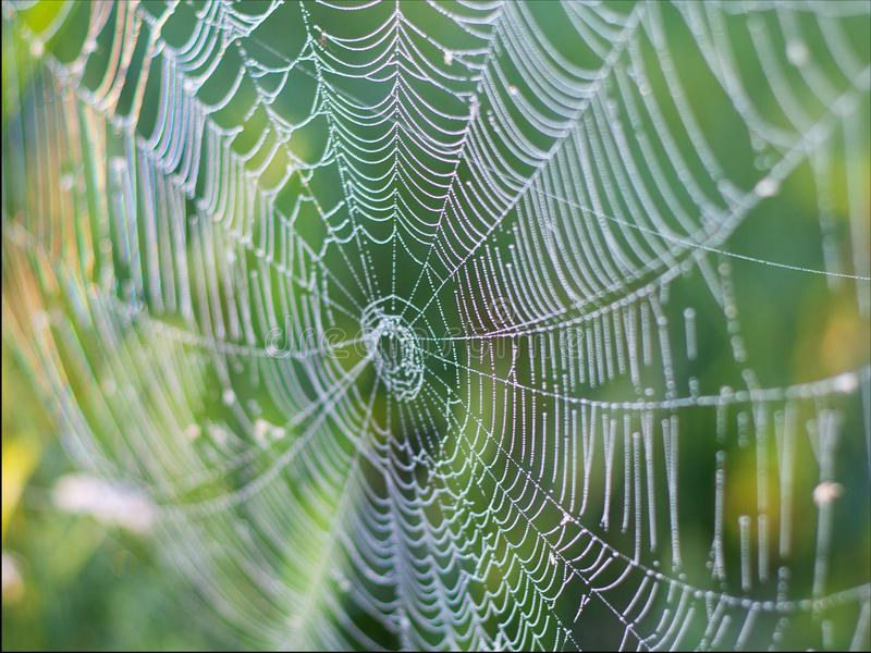 Het mooie rieten Web, spin weefde een groot Web van spiderwebs voor insect vissend, achtergrond stock foto