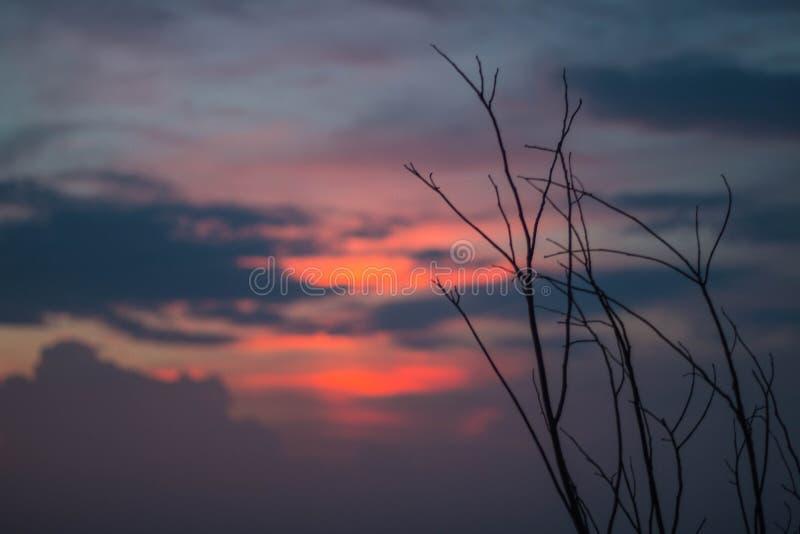 Het mooie silhouet van boomtakken tegen de hemel bij zonsondergang maakt de hemel is blauw, sinaasappel stock fotografie