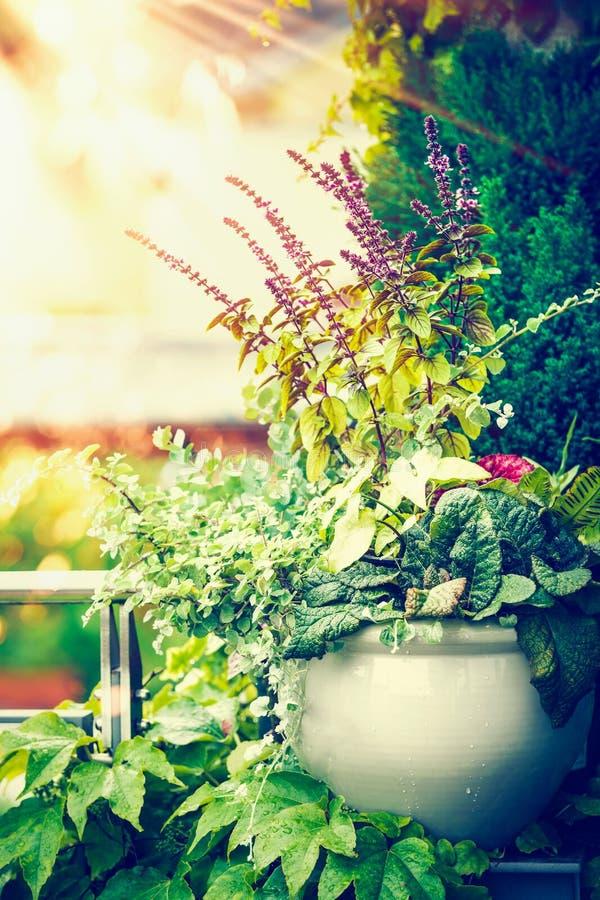 Het mooie terras bloeit pot op balkon of terras in zonsonderganglicht Het stedelijke Container Tuinieren royalty-vrije stock foto
