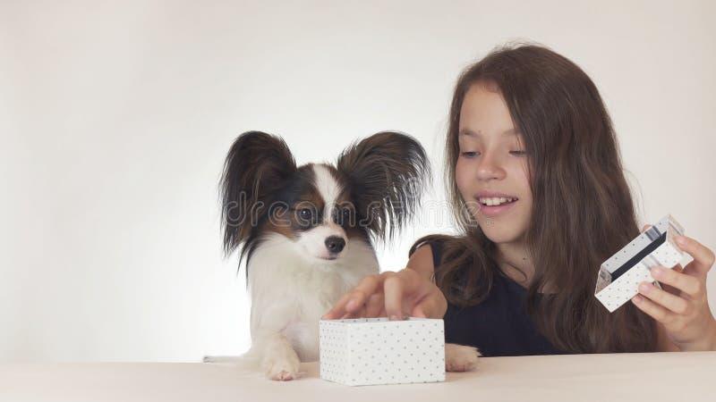 Het mooie tienermeisje geeft een heerlijke gift aan een hond Continentaal Toy Spaniel Papillon op witte achtergrond stock foto's