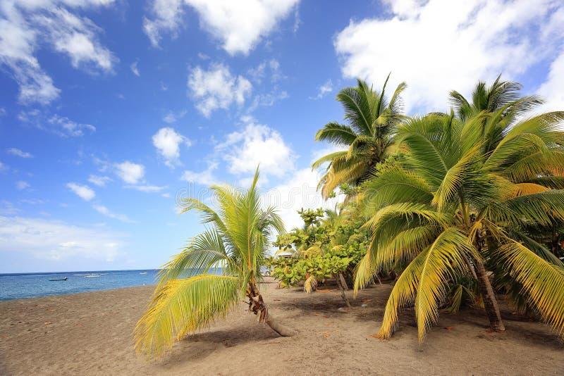 Het mooie tropische eiland van het aard toneellandschap met kokosnotenpalmen stock foto's