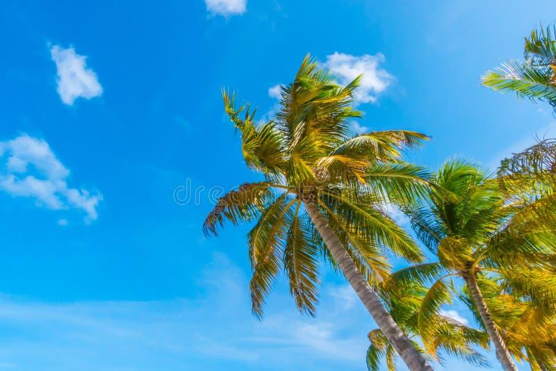 Het mooie tropische eiland van de Maldiven, witte zandige strand en overzees w royalty-vrije stock afbeelding