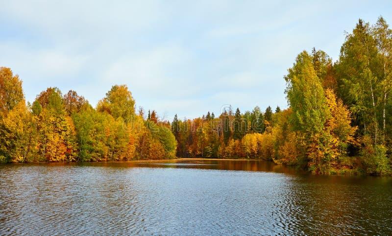 Het mooie water van de herfstforestin royalty-vrije stock fotografie