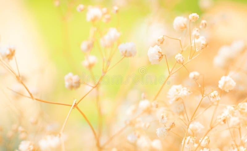 Het mooie Weergeven van Gevoelige Twijgen van Zuivere Witte Romantische Gypsophila-babyadem bloeit, Natuurlijke Wildflowers-Achte stock afbeeldingen