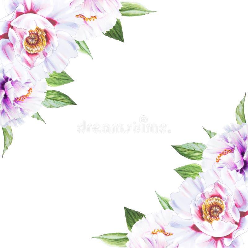 Het mooie witte kader van de pioenhoek Boeket van bloemen Bloemendruk Tellerstekening vector illustratie