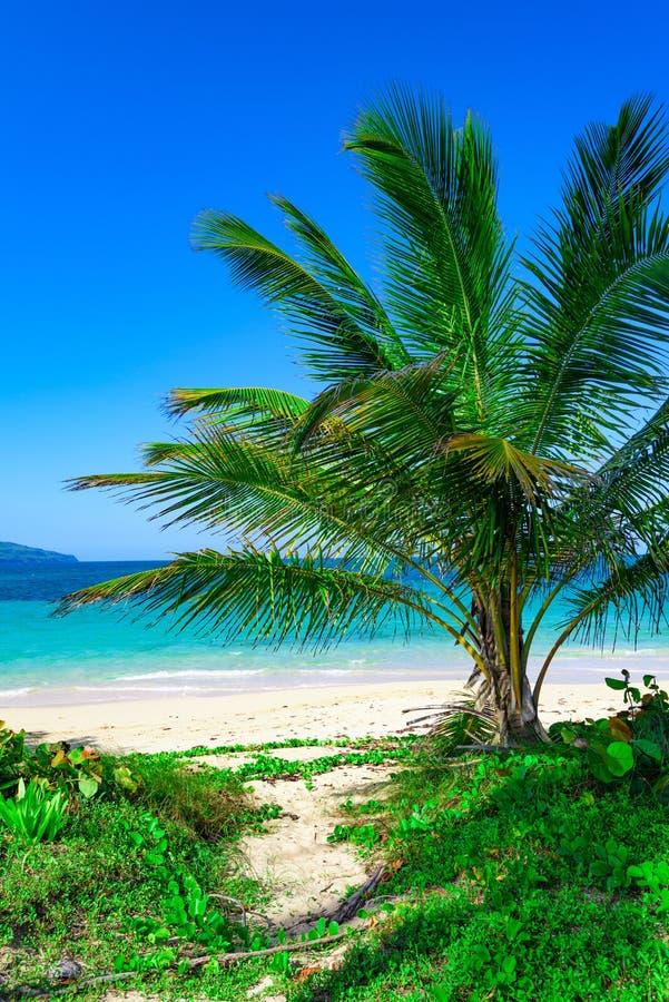 Het mooie witte zand van het paradijsstrand met palm in de toevlucht van de Caraïben stock fotografie