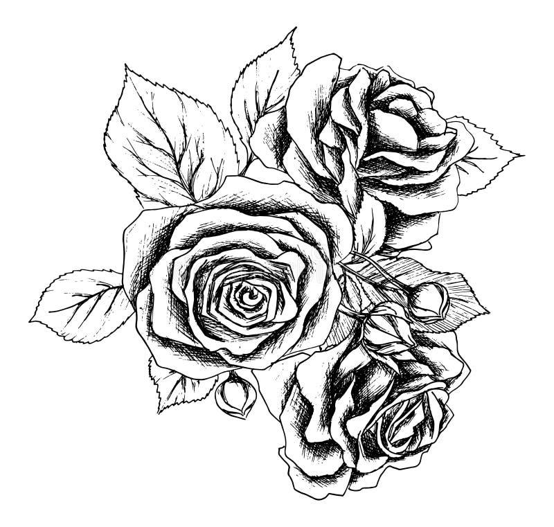 Het mooie zwart-wit zwart-witte boeket nam geïsoleerd op achtergrond toe Hand-drawn de kaart van de ontwerpgroet en stock illustratie