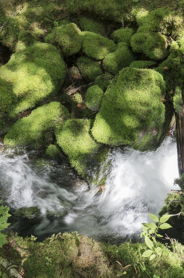 Het mos behandelde stenen dichtbij een beek in de sleep van het Onderstel Carleton, New Brunswick, Canada stock afbeeldingen