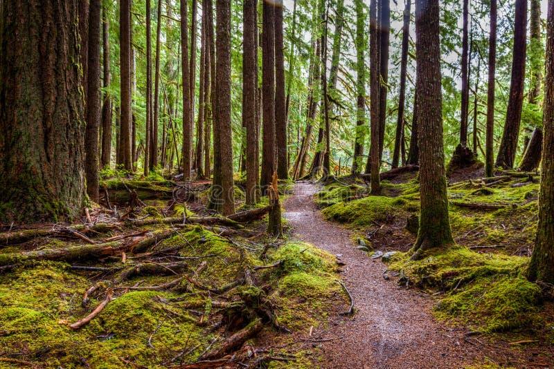 Het mos behandelt bijna alles behalve de weg die door Hoh Rain Forest winden royalty-vrije stock foto