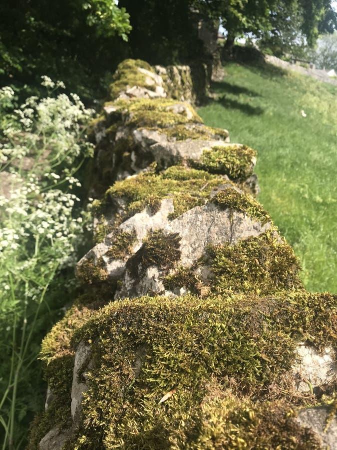 Het mos behandelt droge steenmuur royalty-vrije stock foto's