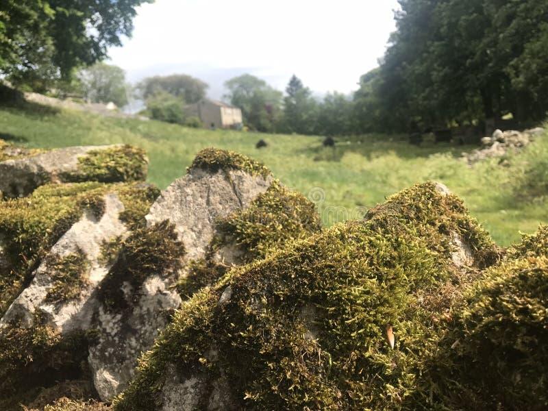 Het mos behandelt droge steenmuur stock afbeeldingen