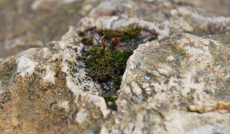 Het mos groeide stock foto