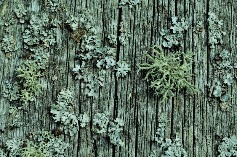 het mos op een oude omheining, kijkt als van de de tijdleeftijd van de koralen mooie oude retro oude dag oude mooie mooie grijze  royalty-vrije stock foto