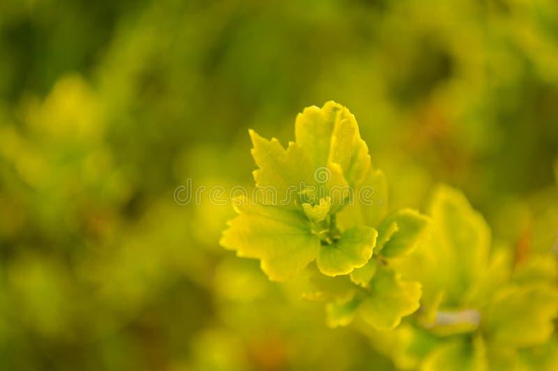 Het mos van de close-up in bos na regen stock foto