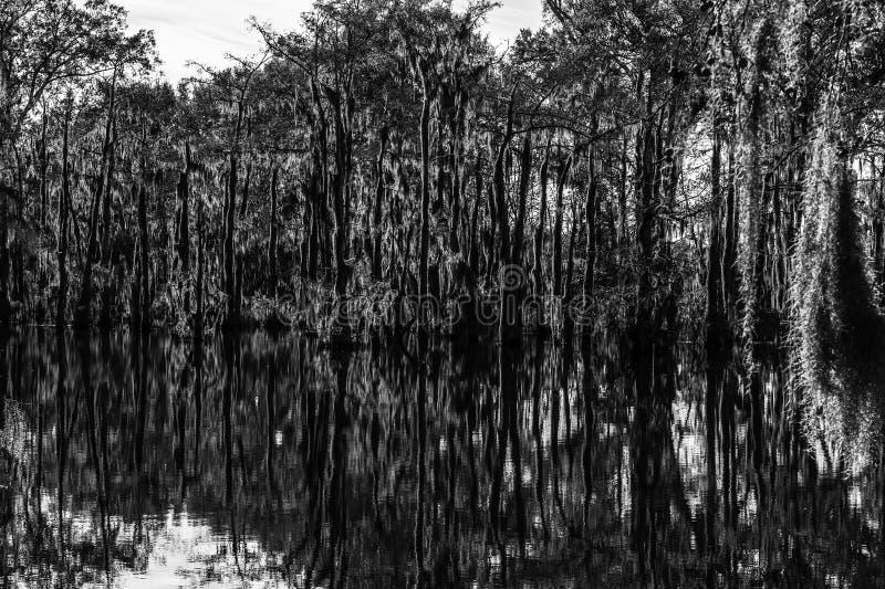 Het Mos van de moerasboom stock foto's