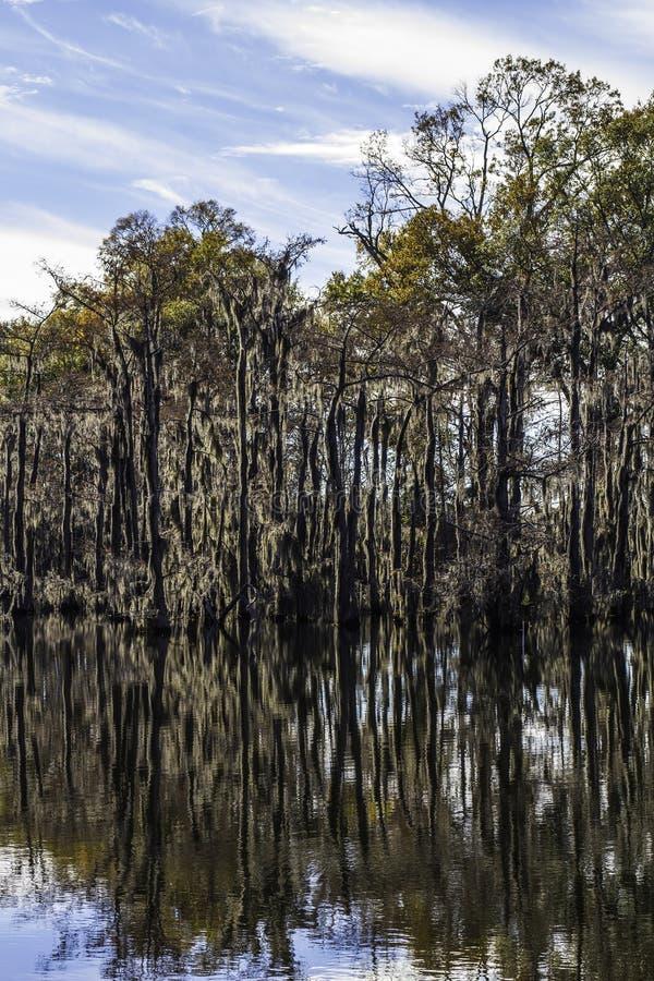 Het Mos van de moerasboom royalty-vrije stock afbeelding