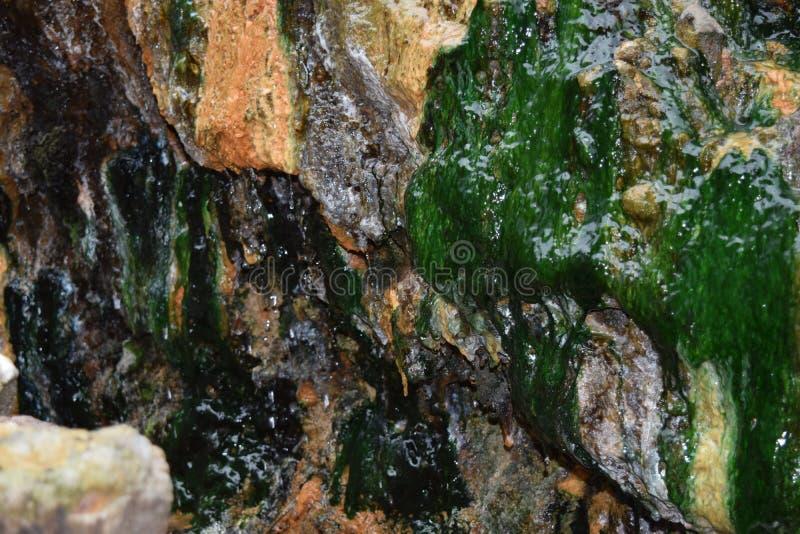Het mos van het zwavelwater op de rots stock fotografie