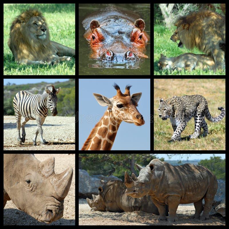 Het mozaïek van Afrika van zoogdieren royalty-vrije stock afbeelding