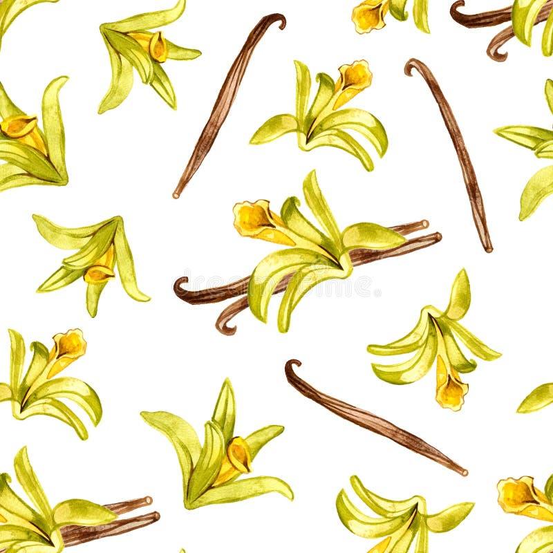 Het naadloze bloemenpatroon, Orchideevanille bloeit waterverfhand getrokken botanische die illustratie op wit wordt geïsoleerd stock illustratie