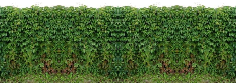 het naadloze patroon over horizontale de wijnstokklimop van de textuuromheining isoleert royalty-vrije stock foto
