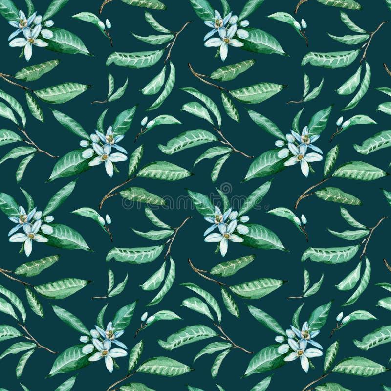 Het naadloze patroon van mandarijn bloeit en gaat op dark - blauw weg - groene achtergrond Waterverf tropische achtergrond stock afbeeldingen