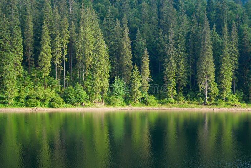 Het naald van het Sparbos en meer van het het houtlandschap van de spiegelbezinning wilde humeurige weer stock afbeelding