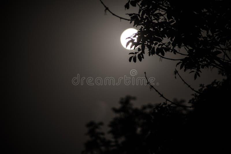 Het nachtlandschap van hemel en de super maan met helder maanlicht achter silhouet van boom vertakken zich De achtergrond van de  stock fotografie