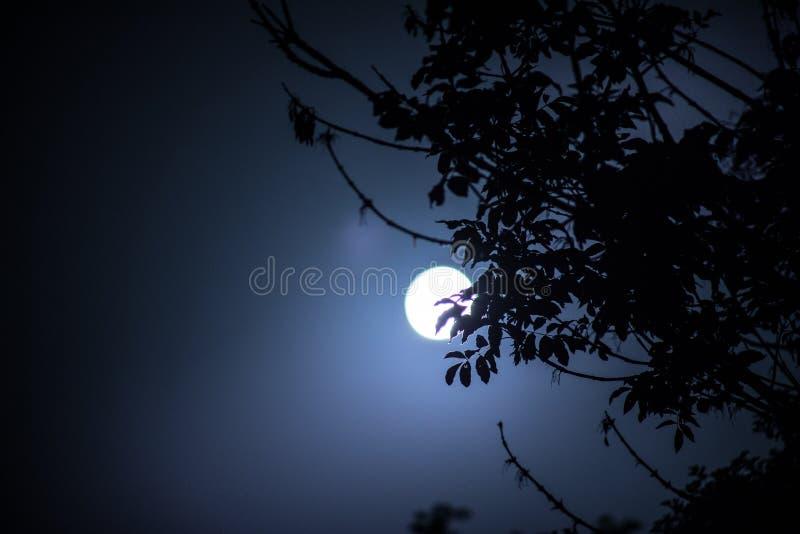 Het nachtlandschap van hemel en de super maan met helder maanlicht achter silhouet van boom vertakken zich De achtergrond van de  stock afbeeldingen
