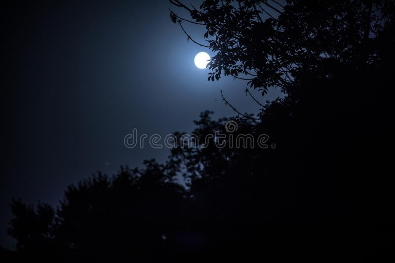 Het nachtlandschap van hemel en de super maan met helder maanlicht achter silhouet van boom vertakken zich De achtergrond van de  stock afbeelding