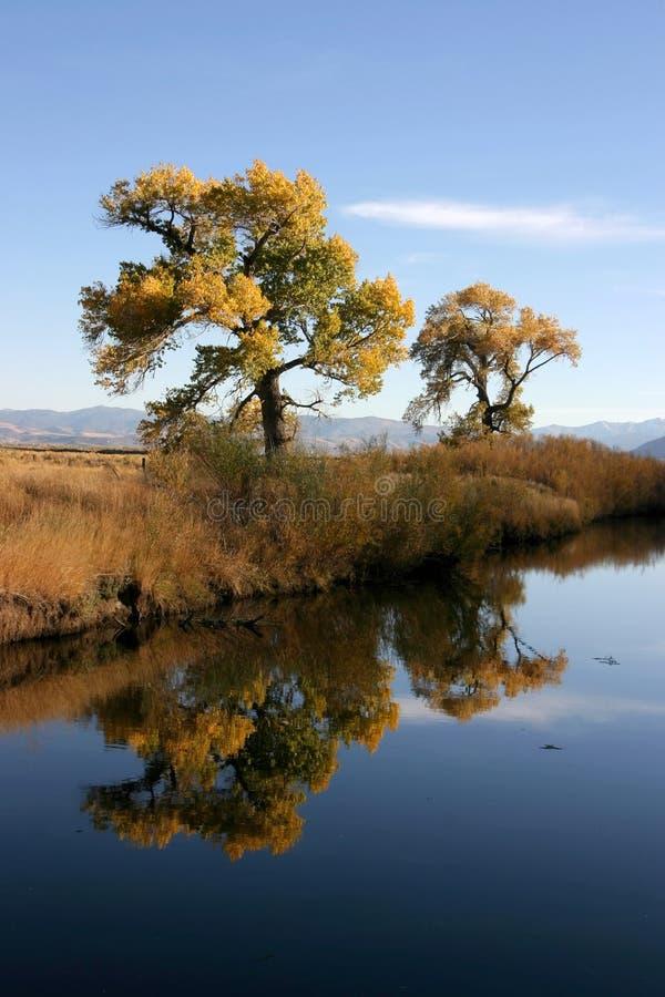 Het Nadenken van bomen royalty-vrije stock fotografie