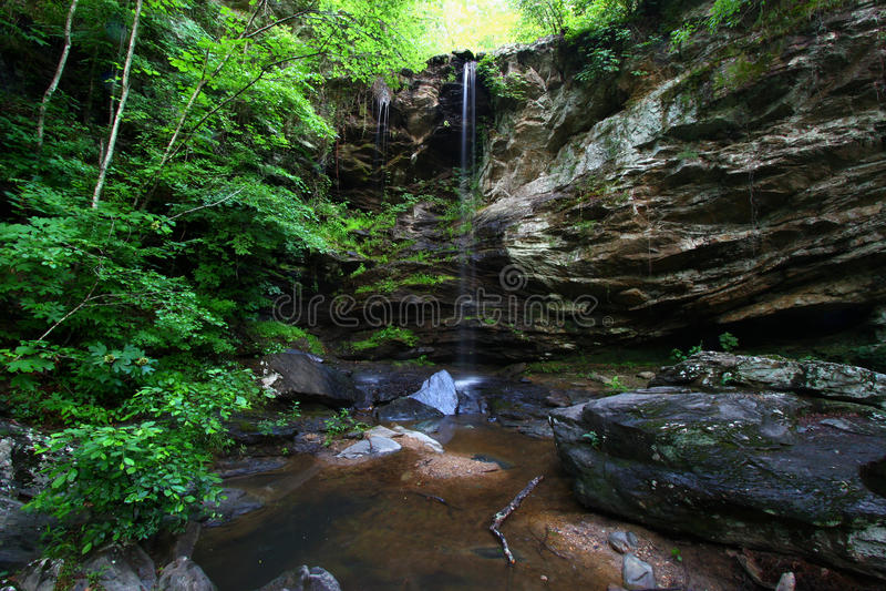 Het Nationale Bos van Talladega - Alabama stock foto's
