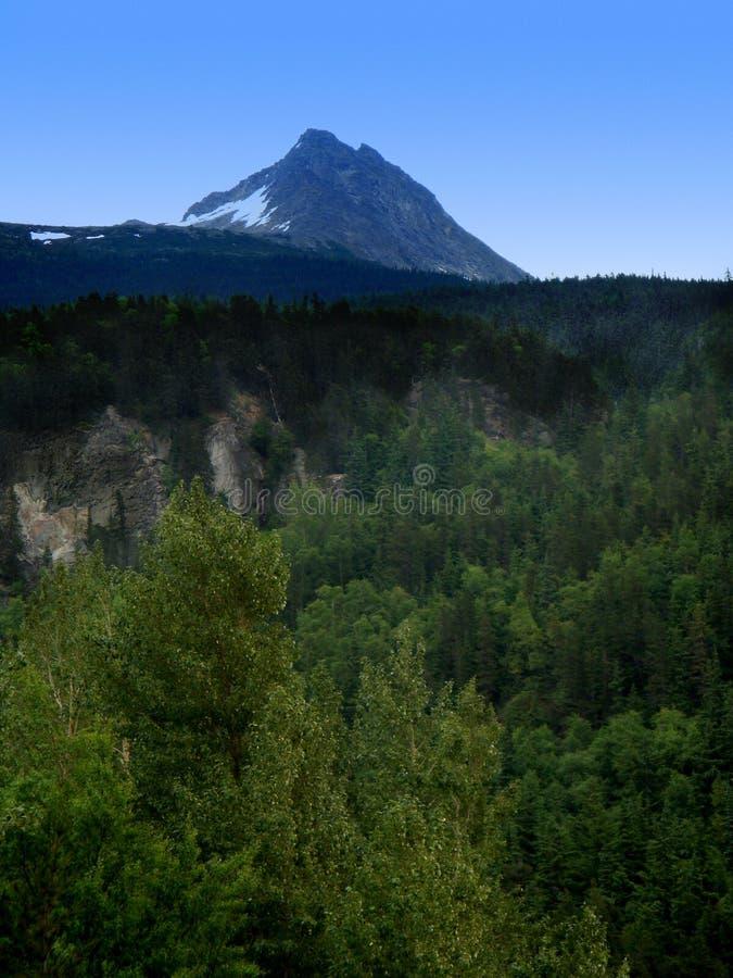 Het Nationale Bos van Tongass royalty-vrije stock fotografie