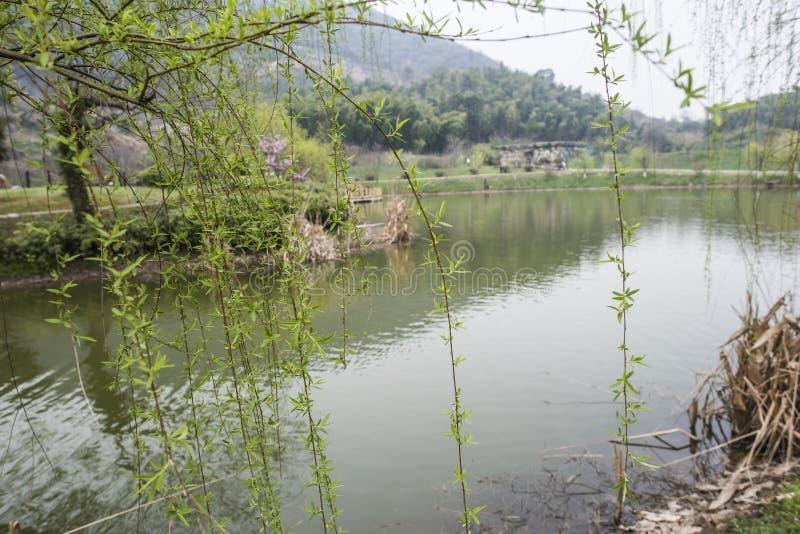 Het Nationale Geologische Park van Zhejiangchangxing stock fotografie