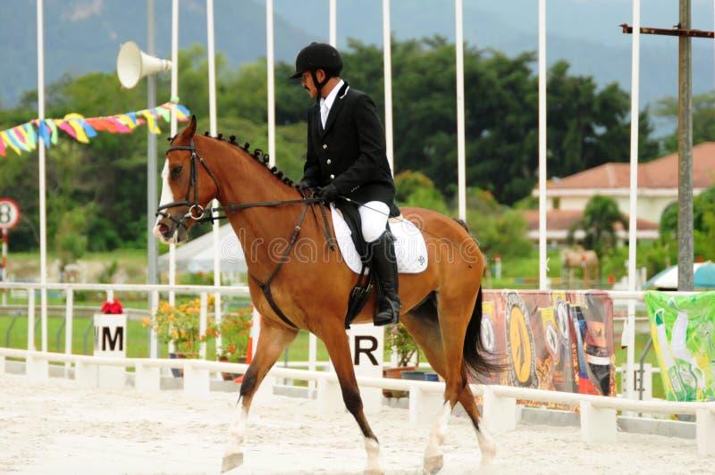 Het nationale Paard toont 2010 - Dressuur royalty-vrije stock fotografie