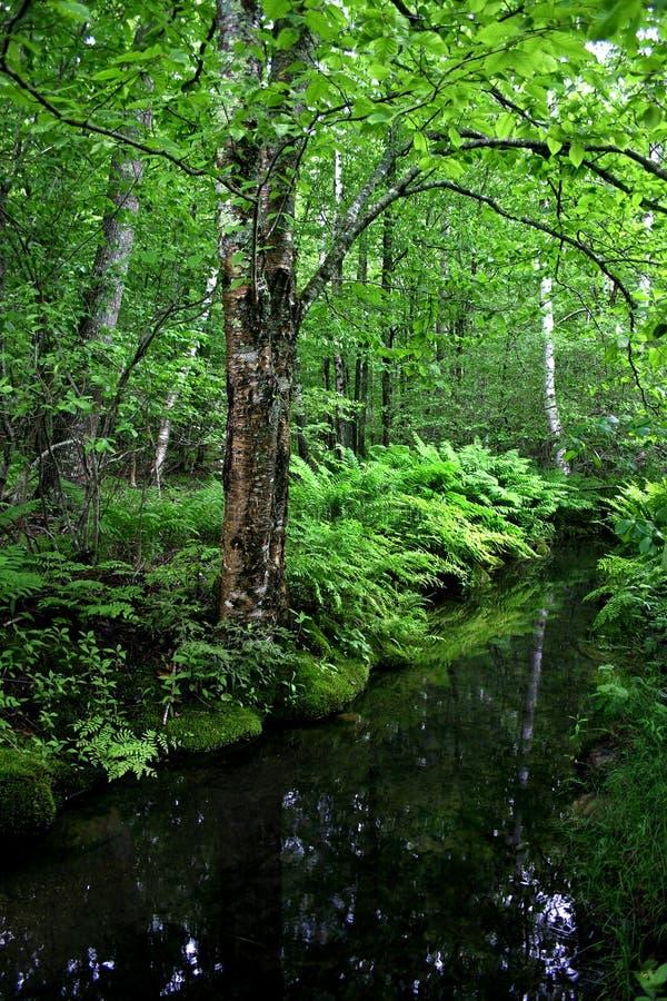 Het Nationale Park van Acadia, Maine stock fotografie