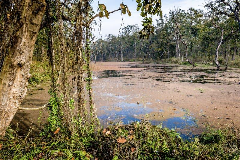 Het Nationale Park van Chitwan, Nepal stock foto