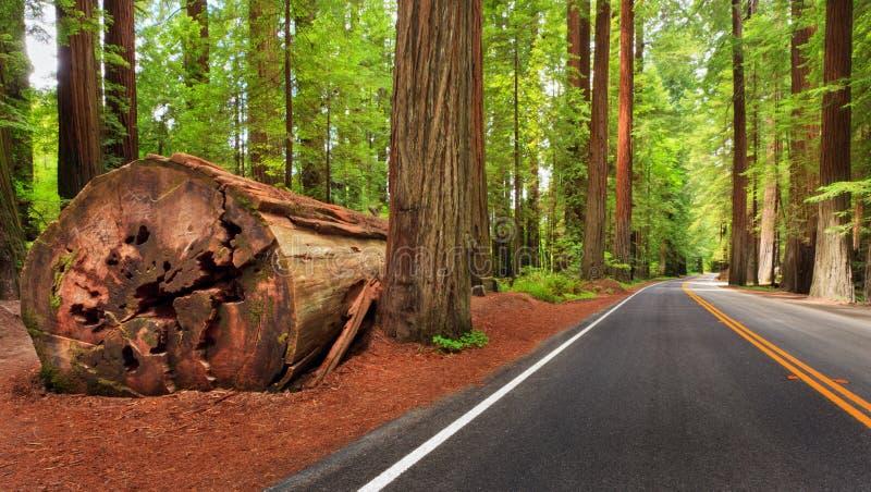 Het Nationale park van de Californische sequoia stock afbeelding