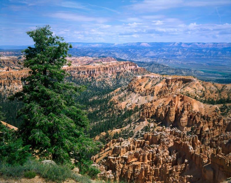 Het Nationale Park van de Canion van Bryce; Utah royalty-vrije stock fotografie