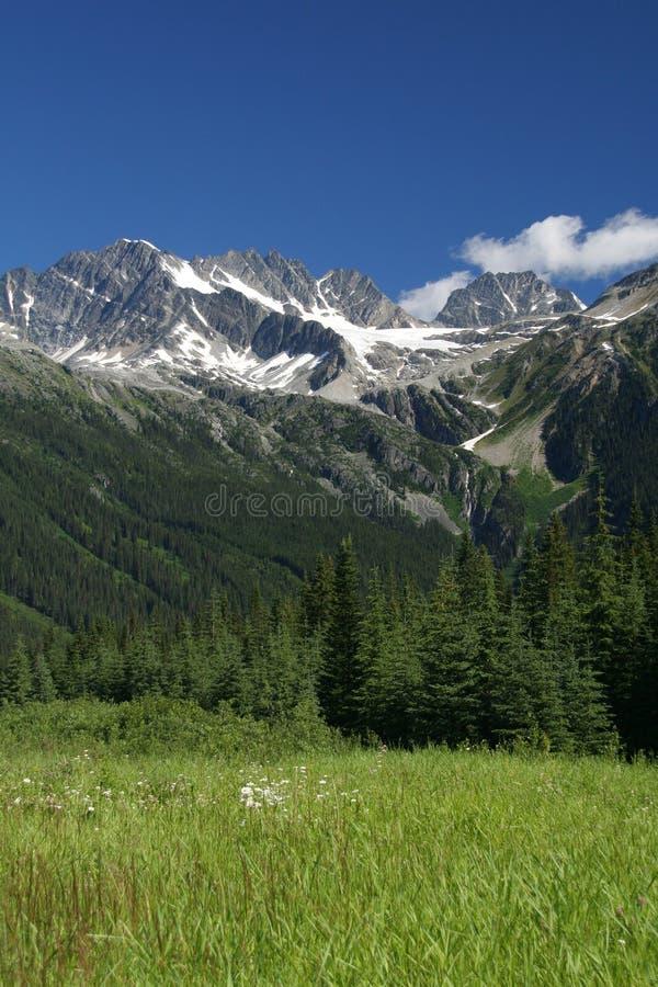 Het Nationale Park van de gletsjer, Canada stock afbeeldingen
