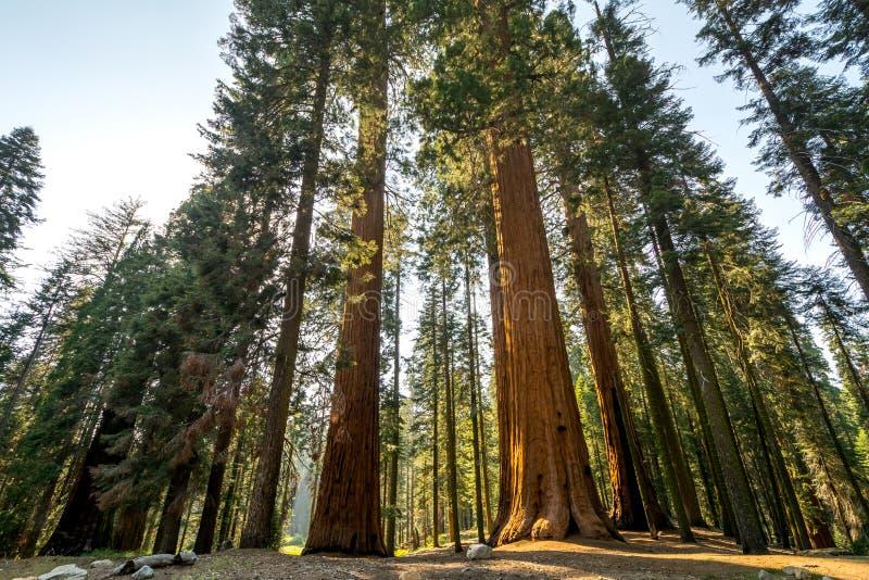 Het Nationale Park van de sequoia, Californië, de V stock afbeeldingen