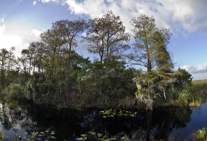 Het Nationale Park van Everglades stock fotografie