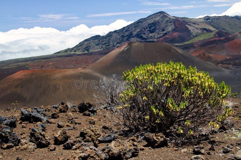 Het Nationale Park van Haleakala stock foto's